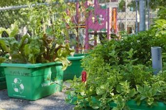 Les jardins sur les toits | de nouveaux espaces pour la communauté | (Culture)s (Urbaine)s | Scoop.it