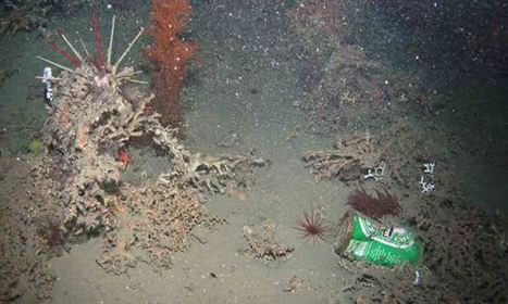 Human litter found in Europe's deepest ocean depths | geography | Scoop.it