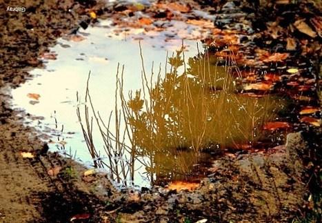 Au fil du temps – Haïku : les feuilles mortes   Merveilles - Marvels   Scoop.it