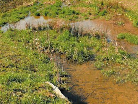 Des zones végétalisées pour venir à bout des polluants ? | pour mon jardin | Scoop.it