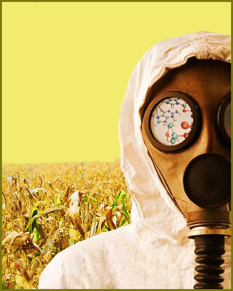 Monsanto, un pericolo per l'umanità   R*ESIST   Scoop.it