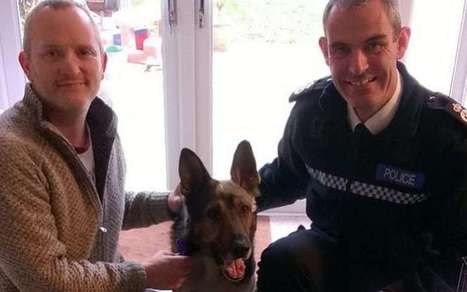 Finn's law: 100,000 sign petition after police dog stabbed in the head | Policing news | Scoop.it