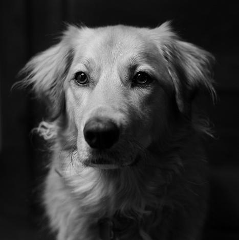 Seeing in Black &White | Kate Lockhart | Fuji X-Life | Scoop.it