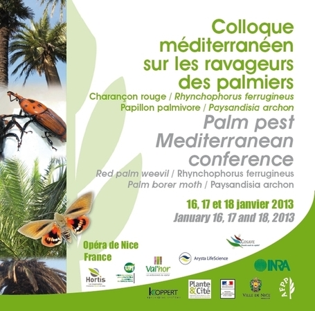 Read abstracts from the 'Palm Pests - Mediterranean Conference' (Nice, FR, 2013-01-16/18) | Pest Alerts | Scoop.it