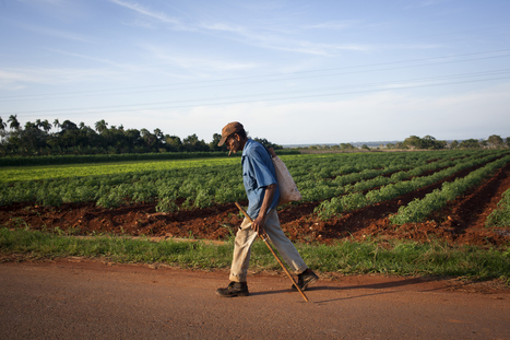 What Cuba can teach America about organic farming | Questions de développement ... | Scoop.it