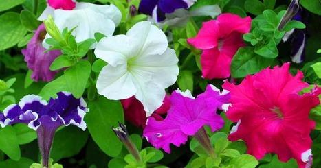 15 plantas para llenar tu hogar de energía positiva (y belleza) | Agua | Scoop.it