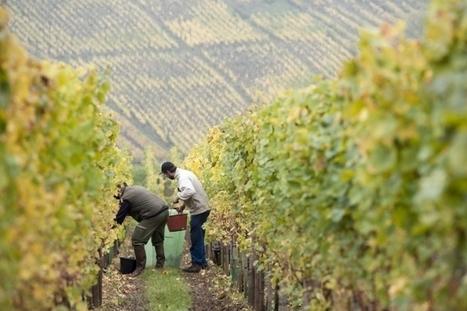 INRA - Mettre du terroir dans son vin | Du Sol Au Vin | Scoop.it