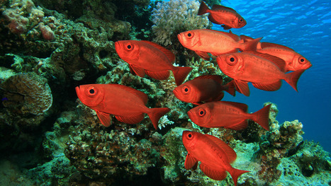 Using Google Earth To Count The World's Fish | Serendipity Café | Scoop.it