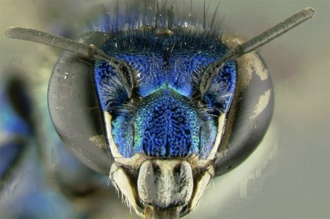 The Evolution of the Orchid and the Orchid Bee | Surprising Science | VCE Biology | Scoop.it