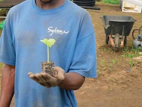 The roots of success - BlueRidgeNow.com | Green Gnome Garden News | Scoop.it