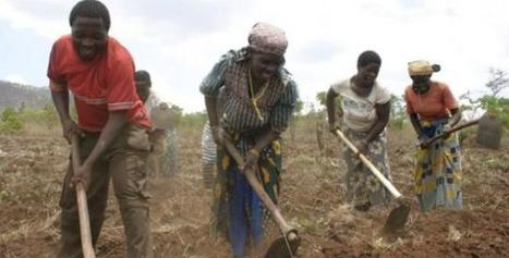 Farmers in Mozambique Fear Brazilian-Style Agriculture   Sustainable agriculture in ACP countries   Scoop.it