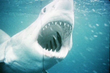 Classic Hollywood: Summer was a different movie season before 'Jaws' | On Hollywood Film Industry | Scoop.it