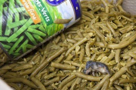 Il découvre une souris morte dans ses haricots verts | Un peu de tout et de rien ... | Scoop.it