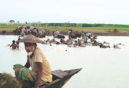 Char – The No Man's Island: A Touching Story Of Displacement - Free Press Journal | kerala | Scoop.it