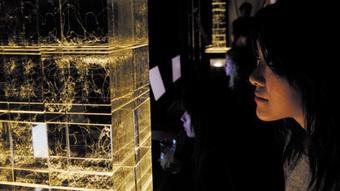 Interdisciplinarity: Artistic merit : Naturejobs | confettis | Scoop.it