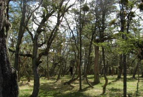 La Fundación Vida Silvestre se opone a la desafectación de la reserva Río Valdez | Sur54.com | Asociación Manekenk | Scoop.it