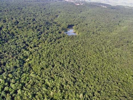 Auvergne : filière bois et développement durable | Filière bois - général | Scoop.it