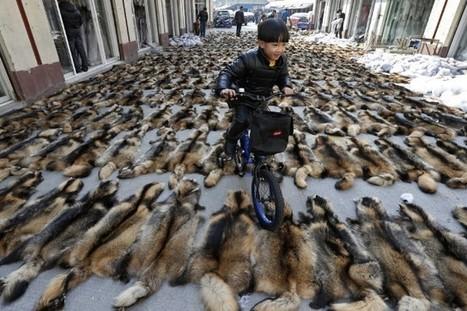 L'industrie du cuir de chien dénoncée - LaPresse.ca | animals rights and protection | Scoop.it