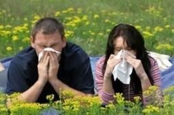 Allergie: deze natuurlijke middelen helpen tegen hooikoorts   Leef Nu Gezonder   Leef Nu Gezonder   Ademhaling   Scoop.it