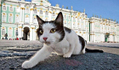 Saint-Pétersbourg célèbre la Journée du chat de l'Ermitage | CaniCatNews-actualité | Scoop.it