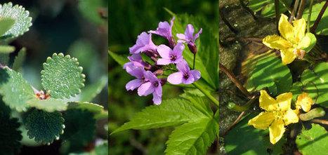 Auvergne : 28% de la flore régionale seraient menacés | ECO13 | Scoop.it