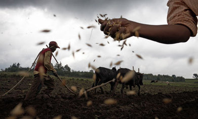 #GMO crops won't help African farmers | Million Belay and Ruth Nyambura | Messenger for mother Earth | Scoop.it