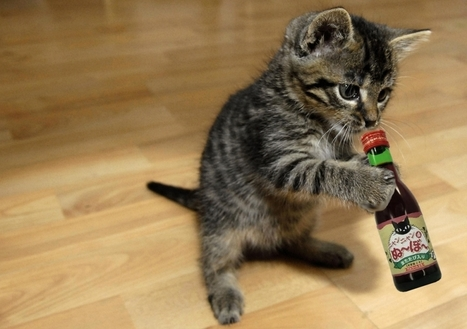 The end of drinking alone? Wine for cats is a thing | Love Your (Unstuffy) Wine | Scoop.it