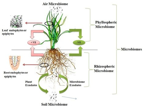 Recent Developments in Systems Biology and Metabolic Engineering of Plant–Microbe Interactions | microbial pathogenesis and plant immunity | Scoop.it