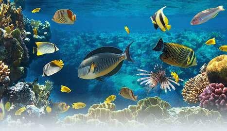 Wet Paper Publications - Marine Studies Textbooks Australia | Australian Curriculum Resources | Scoop.it