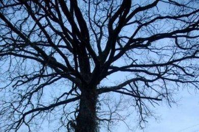 Photographie : il court après les arbres | Actualités Photographie | Scoop.it