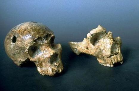 El Hombre de Neandertal pobló Italia hace 250.000 años, según un nuevo estudio | Arqueología, Historia Antigua y Medieval - Archeology, Ancient and Medieval History byTerrae Antiqvae (Blogs) | Scoop.it