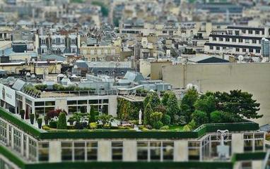 París permite por ley a cualquier persona tener un huerto urbano - Ecoportal.net | Educacion, ecologia y TIC | Scoop.it