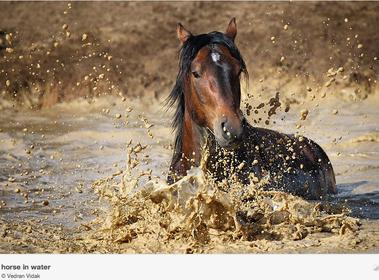 Wet Horse Photograph! - Susie Blackmon's Stall | Amazing Rare Photographs | Scoop.it