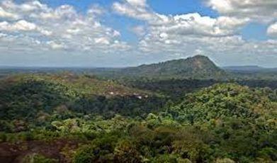 60 nouvelles espèces animales découvertes au Surinam   Ecologie et environnement   Scoop.it