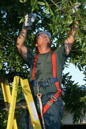 Professional tree contractor by Stump Busters. | Stump Busters | Scoop.it