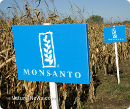 Monsanto ordered to stop making false advertising claims about GMOs in South Africa | Plant Based Nutrition | Scoop.it
