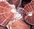 Mass-death of Canadian scallops - Ocean pH changes | Aquatic Vet News You-can-Use | Scoop.it