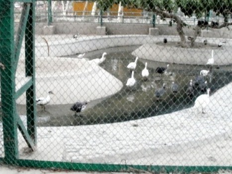 Animal rights: No water for animals at Bahawalpur Zoo – The Express Tribune | Nature Animals humankind | Scoop.it