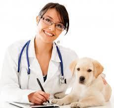 Preventative Health Care Tips for Your Pet | Vet Hospital Mississauga | Scoop.it