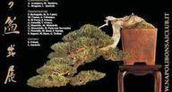 L'arte del bonsai in mostra a Ercolano esposizione e convegni a ... - Il Mattino | fiori e piante, curiosità e notizie | Scoop.it