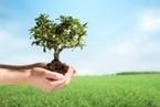 Itau BBA green financing - Inter-American Development Bank | Geoflorestas | Scoop.it