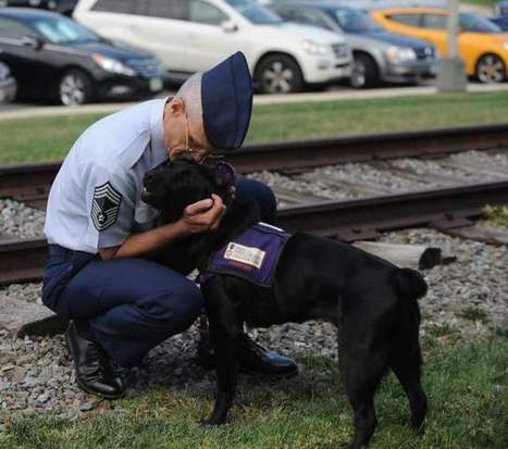 New study will measure dogs' usefulness to vets with PTSD - NavyTimes.com | It's a dog's life | Scoop.it