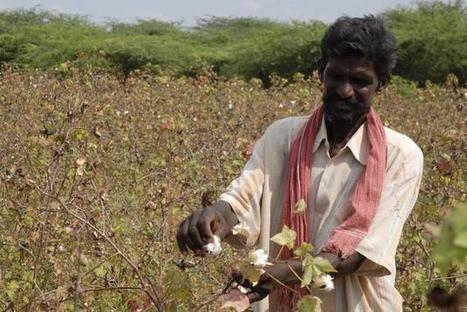 Regulating genetic modification - The Hindu | plant cell genetics | Scoop.it