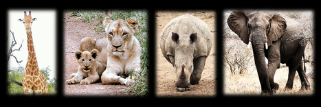 Infographics, Images, Info About Awesome African Wildlife Species | Wildlife Conservation: People and Stories | Scoop.it