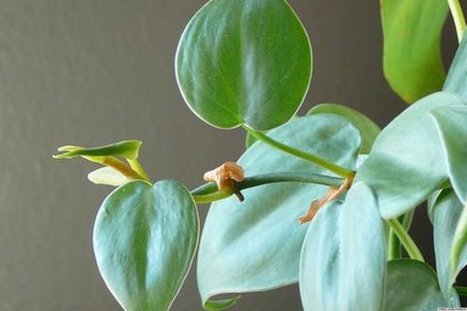 10 Houseplants For A Restful Home | Home Performance | Scoop.it
