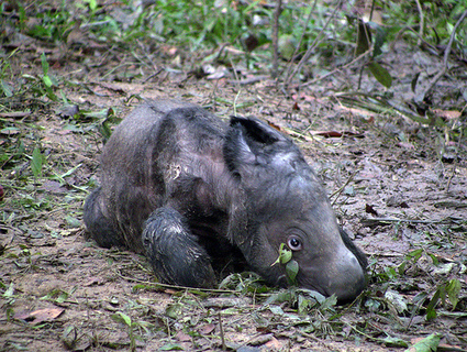 One Special Rhino | GarryRogers Biosphere News | Scoop.it