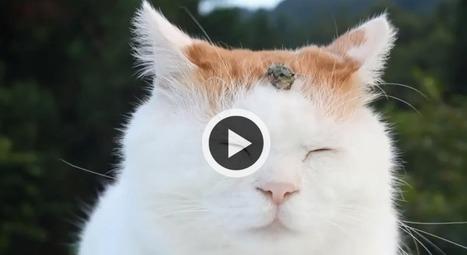 Offrez-vous une séance de méditation avec la chat zen ! (Vidéo) | CaniCatNews-actualité | Scoop.it