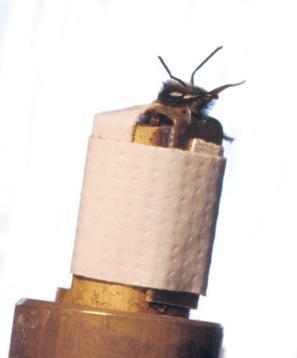 Les abeilles ont du flair | EntomoNews | Scoop.it