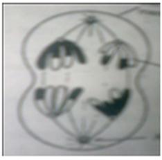SLC Model Question Set 1 (Science) - Educate Sansar   Educate Sansar   Scoop.it