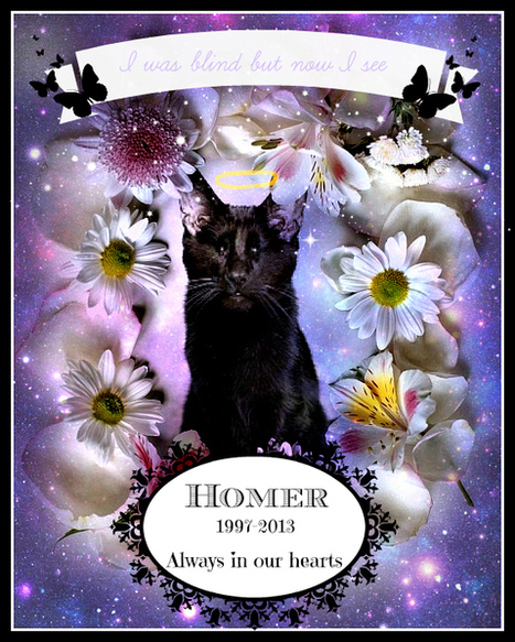 Cat Wisdom 101 | Homer the Blind Cat in Memoriam | Cats | Scoop.it